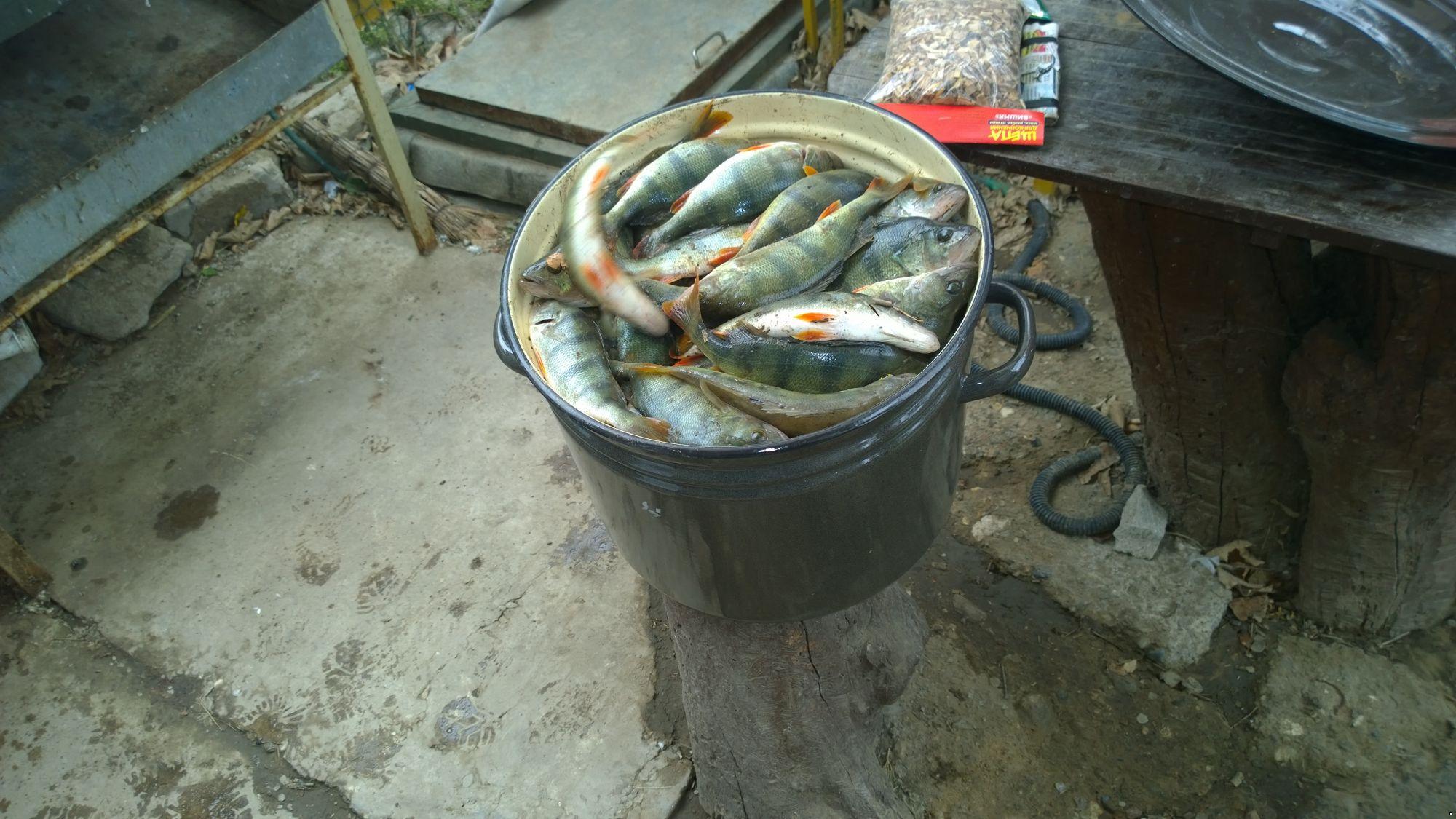 какая рыба клюет сегодня