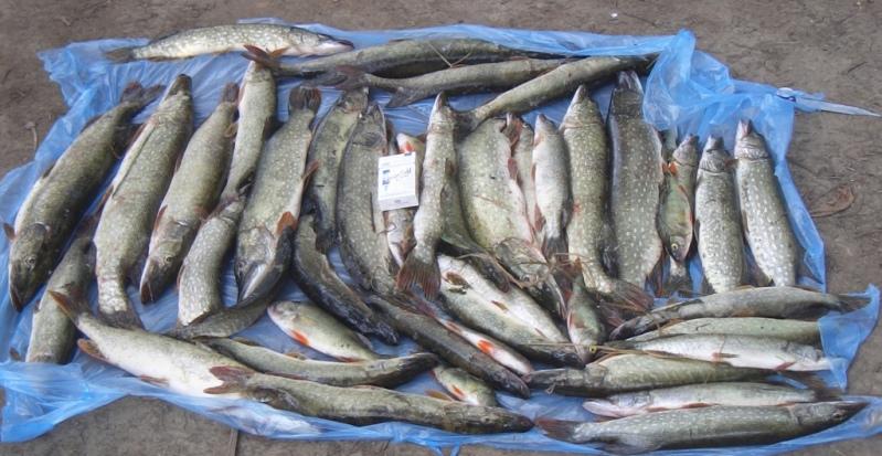где и как ловить рыбу в сентябре